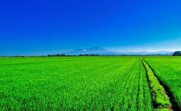 補助金 農業