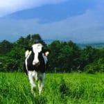 令和3年度飼料穀物備蓄対策事業