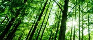 安全な木材製品等流通影響調査・検証事業