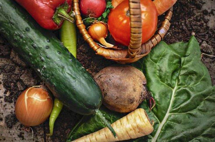 令和3年度持続的生産強化対策事業のうち有機農業推進総合対策