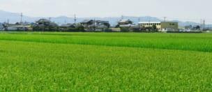 令和3年度持続的生産強化対策事業のうちGAP拡大推進加速化(うち農産分)