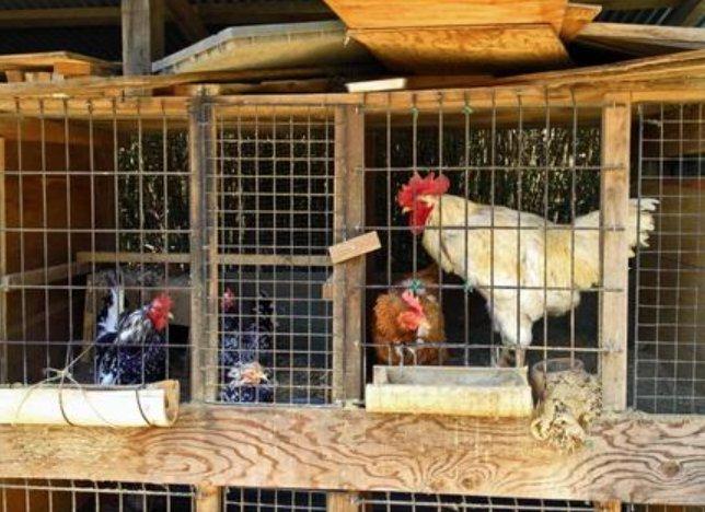 令和3年度鶏卵生産者経営安定対策事業